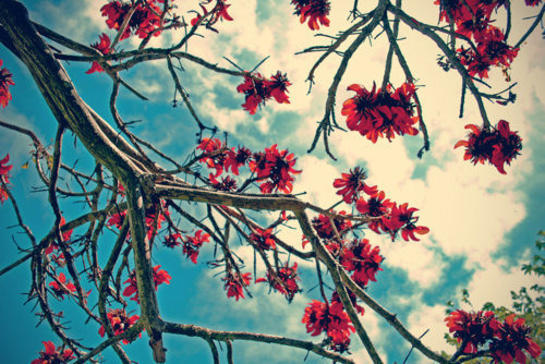 branch-clouds-flowers-happy-hope-Favim.com-21592