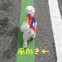 【風向きお知らせ犬】