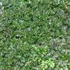 渓谷別邸もちの木  千葉養老の滝温泉の画像