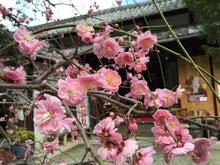 源九郎稲荷神社9