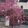 Special me!!イベント報告♥︎【福岡市南区痩身ボディーフェイシャルエステ専門のファレノの画像
