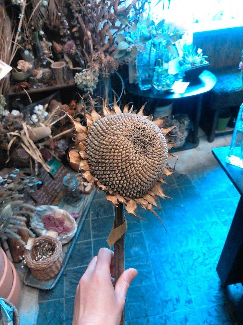 面白さ。 | 川越の花屋Nestの日常