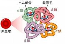 001_hemogrobin
