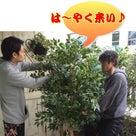 緑緑しいっ!!!!の記事より