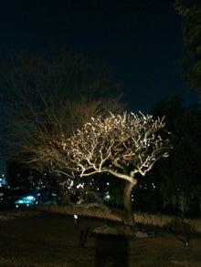 白梅の立つ夜景