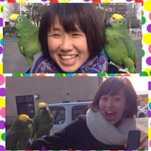 埼玉の黄色い帽子鳥と…