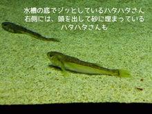 加茂水族館2