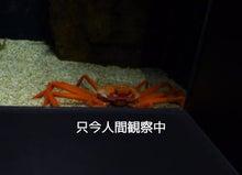 加茂水族館9