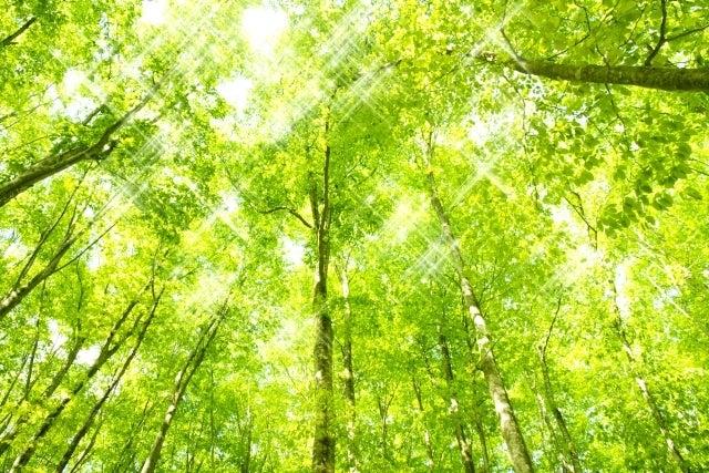 ミドリの木々