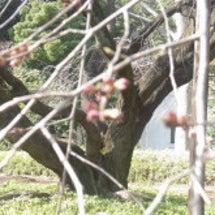 情趣ある庭園と春の息…