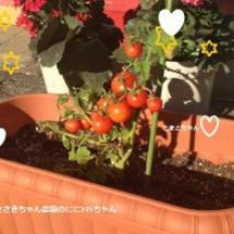 トマトちゃんトマート…