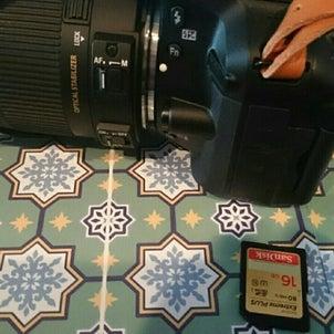 カメラ日和パグ日和の画像