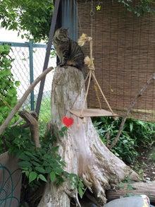 ラッキーランドの流木