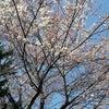 桜咲く、、、(その2)の画像