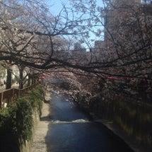 目黒川散歩とパン散歩