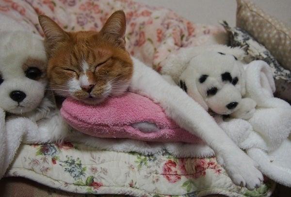 ホウ 酸 団子 猫