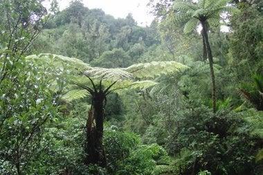 ワイタケレの森
