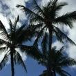 ハワイで朝活♪ ビー…