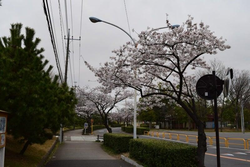 スタジアム前の道路