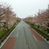 お散歩☆の画像