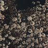 日曜日の夜桜さんぽの画像