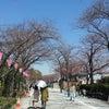 桜咲く、、、、(その3)の画像