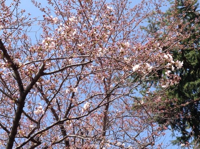 明月記 桜