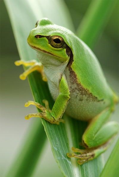 飛び込む 蛙 季語 の 古池 や 水 音