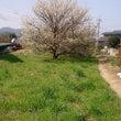 お散歩*春