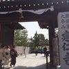 建仁寺の双龍・雲竜の画像