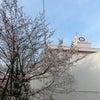 春がやってきた・・・♪の画像