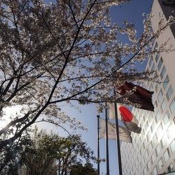 画像 桜咲くtennis部会 の記事より 9つ目