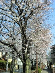 桜並木の径5