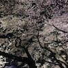 千鳥ヶ淵の夜桜の画像