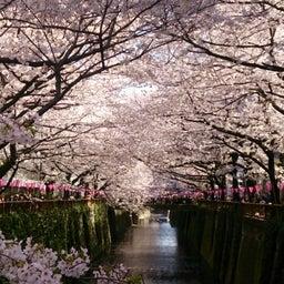 画像 お花見~目黒川にて の記事より 1つ目