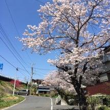 春だねぇo(^▽^)…