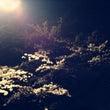夜桜とゆうのを