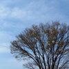 ホーホケキョと桜バイキングの画像
