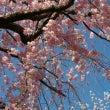 桜がさいて季節が巡る…