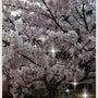 ジョギングと桜♪