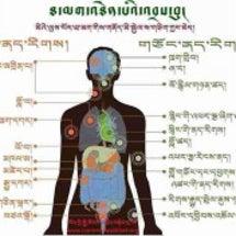 チベットマッサージメ…