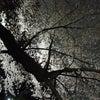 六義園 桜ライトアップの画像
