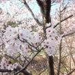 春爛漫♪桜色の大三島…