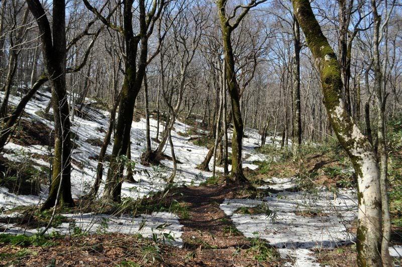 2015年4月の白神山地「十二湖」の雪解け