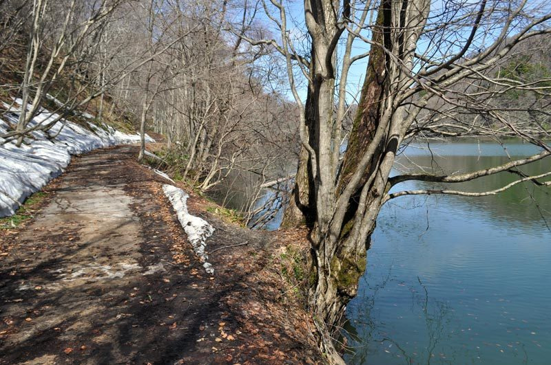 2015年4月の白神山地「十二湖」鶏頭場の池