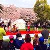 舎人公園の桜祭りの画像
