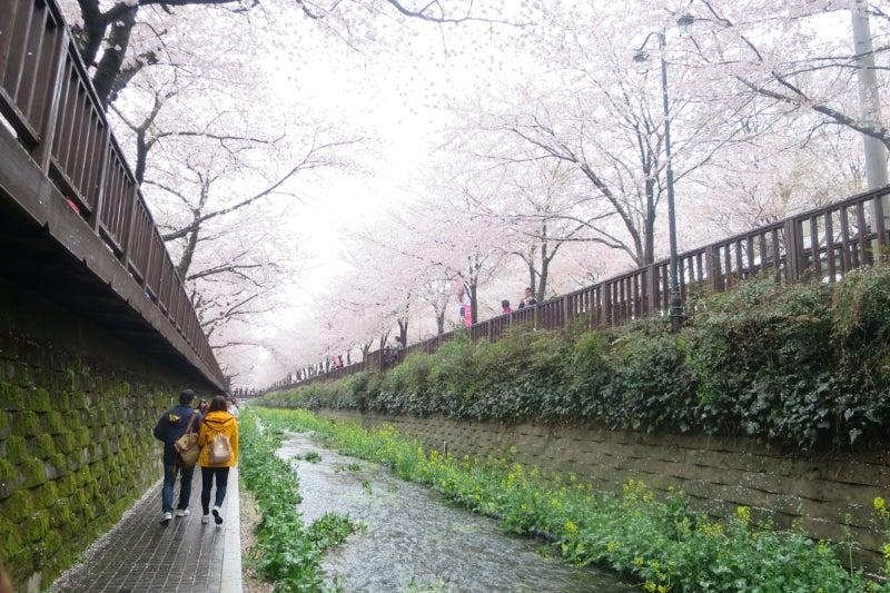 鎮海桜祭3