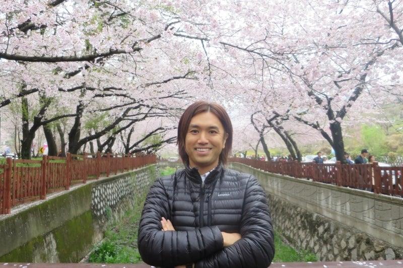 鎮海桜祭1