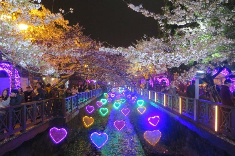 鎮海桜祭23