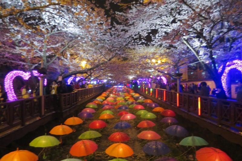 鎮海桜祭25
